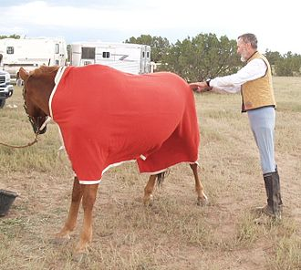 A horse wearing a cooler 50mile-massage.jpg