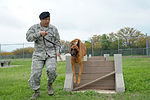902nd Security Forces Squadron 150408-F-IJ798-058.jpg