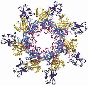 Anthrax toxin - Ribbon diagram of a PA63 heptamer forming a pre-pore.