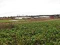 A Sugar Beet crop - geograph.org.uk - 1087148.jpg
