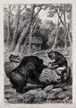 A fox, sitting on a tree trunk, is enticing a bear to poke i Wellcome V0023068ER.jpg