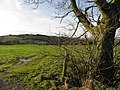 A gap in the field, Brackagh - geograph.org.uk - 1596166.jpg