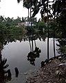 A pond at Kayalpara, Jagadishpur Hat, village in Howrah district, West Bengal - 2021-02-05.jpg