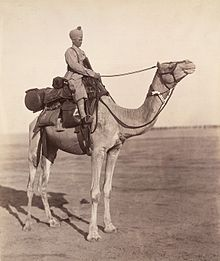 A sowar of the Bikaner Camel Corps on his mount showing details of kit.jpg