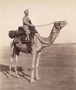 Bikaner Camel Corps - A sowar of the Bikaner Camel Corps on his mount showing details of kit