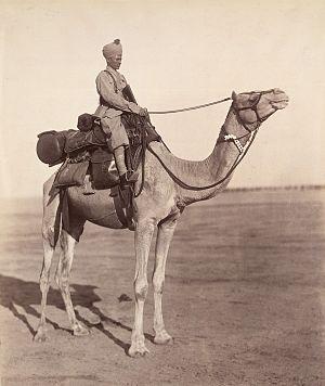 Bikaner Camel Corps - A sowar of the Bikaner Camel Corps on his mount showing details of kit