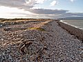 A steeply sloping shingle storm beach - geograph.org.uk - 273901.jpg