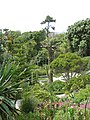 Abbey Gardens, Tresco, Scilly - geograph.org.uk - 1606637.jpg