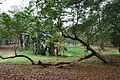 Acharya Jagadish Chandra Bose Indian Botanic Garden - Howrah 2011-02-20 1543.JPG