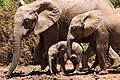 Addo Elephant National Park, South Africa (Unsplash).jpg