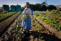 Africa Food Security 16 (10665114074).jpg