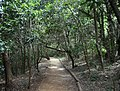 Afromontane forest footpath - WesternCape South Africa.JPG