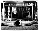 Alaskan and Siberian Fur Co storefront, showing display of animal furs, skins, horns, Native American baskets, and kayak, Nome (NOWELL 89).jpeg