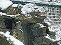 Altai-Luchs im Tierpark Berlin am 27.12.2005.jpg
