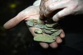 Amateur archeologists uncover WWII artifacts 170906-F-XW046-0319.jpg