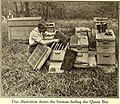 American homes and gardens (1912) (18149880872).jpg