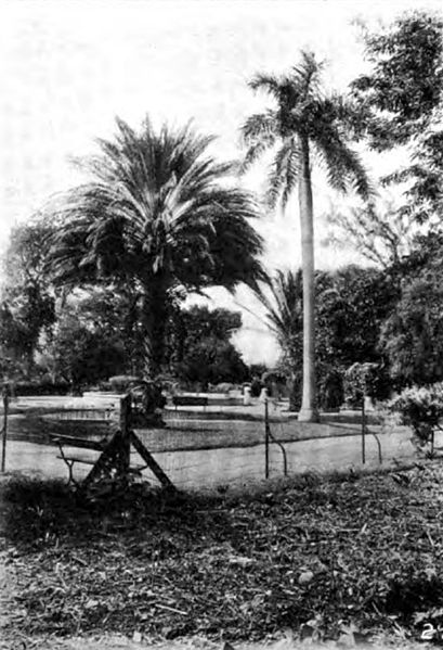 File:Americana 1920 Tropical Forest Products - date palm and cabbage palm.jpg