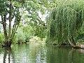 Amiens (dans les Hortillonnages) 1.jpg