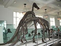 Museo americano de historia natural wikipedia la for Sexo en nueva york wikipedia