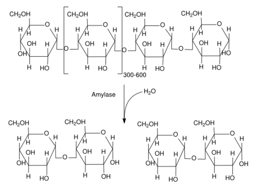Amylase reaction consisting of hydrolyzing amylose, producing maltose Amylase reaction.png