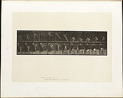 Animal locomotion. Plate 157 (Boston Public Library).jpg
