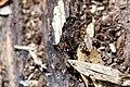 Ant (26185545402).jpg
