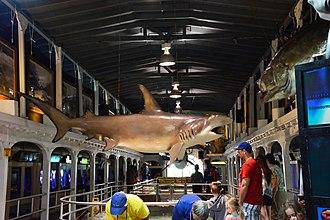 Key West Aquarium - Inside the aquarium