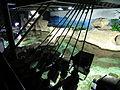 Aquarium Genoa 52.JPG