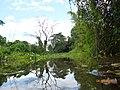 Arroyo Tobatiry, Paraje Karau Keha - panoramio.jpg