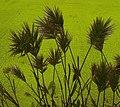 Artistic Effect Grass 3.jpg