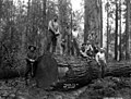 Asian woods crew, Nehalem Timber & Logging Company, Scappoose, ca 1922 (KINSEY 2428).jpeg