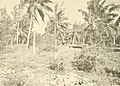 Atoll research bulletin (1969) (20159296929).jpg