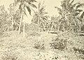 Atoll research bulletin (1969) (20159296929).jpg