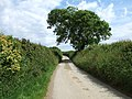 Atypical Cornish lane - geograph.org.uk - 866040.jpg