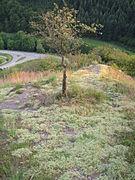 Auf den felsen im naturschutzgebiet.JPG