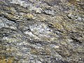 Augen gneiss (Precambrian; Rt. 93 roadcut next to the New River, Mouth of Wilson, Virginia, USA) 1 (30747530085).jpg