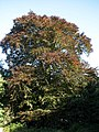 Autumn colours in Long Plantation - geograph.org.uk - 586438.jpg