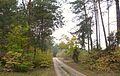 Autumn in Puszcza Notecka, Babliniec (11).JPG