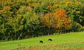 Autumn trees, Glenarm - geograph.org.uk - 1010349.jpg