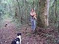 Aventura na floresta.jpg