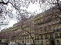 Avenue Carnot Paulownias.jpg