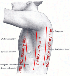 Anatomical plane - Axillary lines.