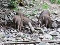 Břežanský zookoutek, vyhlídka na prasata (02).jpg