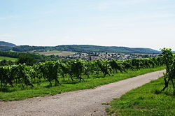 BW-kuernbach-weinberge.jpg