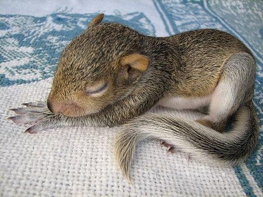 squirrel deterrent