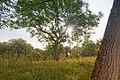 Bad Bellingen Naturschutzgebiet Rütscheten Bild 12.jpg