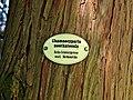 Baden Sightseeing-Tour, Baum in der Parkanlage Schloß Favorite bei Förch - Rastatt - panoramio.jpg