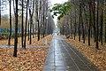 Balashikha, Moscow Oblast, Russia - panoramio - A-DIR.jpg