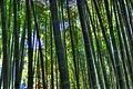 Bamboo (4189391823).jpg