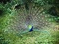 Bangabandhu Sheikh Mujib Safari Park 21.jpg